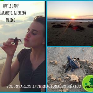 Turtle Camp